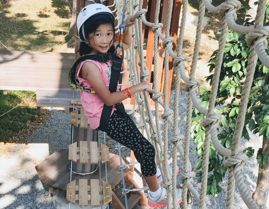 Forest Adventure Tree Top Course: Challenging One's Limits and Having Fun