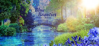 Blue Beauties: Gardens Turns 5